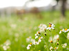 Jupiter 9 sample 2 (Arturo Lutz Ley) Tags: flower green spring bokeh 85mm olympus 420 bee m42 f2 evolt jupiter9 43adapter