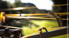 [251/365] Even Spiders wash their smalls (Rich Jankowski) Tags: light england sunlight yellow canon eos unitedkingdom bokeh web spiderweb silk line cobweb photoaday gb 365 peg ff washingline spidersilk ef2470f28lusm canon5dmkii 5d2 2012inphotos