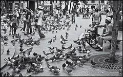 Plaza De Armas (Samy Collazo) Tags: street people urban gente puertorico pigeons streetphotography sanjuan bancos urbana palomas benches plazadearmas urbanphotography streetphotographer fotocallejera fotografiaurbana streetcapture blackwhitephotos yashicaelectro35gt fotografiacallejera fotourbana yashinon45cmf28 lightroom3 samycollazo silverefexpro2