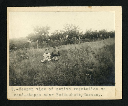 7. Near view of native vegetation on sand-steppe near Heidesheim, Germany, 1914