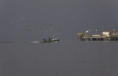 im Osten Sonne, im Westen dunkler Nebel (blutdoping) Tags: boot licht bodensee fischer mven