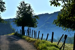~~Chemin lumière...~~ (Joélisa) Tags: morning trees bird landscape arboles camino path arbres paysage oiseau chemin forêt matin croquenature blinkagain bestofblinkwinners blinksuperstars septembre2012