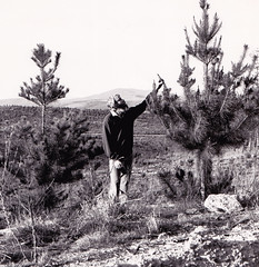Me checking out plantation growth for Annual Report image (spelio) Tags: bw random hasselblad plantation canberra duffy hassleblad forests act stromlo generalshots f1516683
