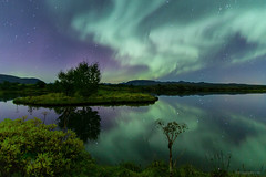 Beauty is in the eye of the beholder (Frijfur M.) Tags: nightphotography sky lake cold color reflection tree water grass stars landscape iceland nightshot aurora gras ingvellir sland northernlights auroraborealis hvnn ingvallavatn norurljs thingvellirnationalpark natureplus canon50d flickraward tokina116 coppercloudsilvernsun frijfurm