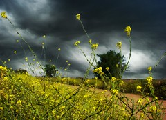 Stronger / Ms fuertes (Claudio.Ar) Tags: flowers light sky storm santafe color nature argentina clouds topf50 shadows sony cielo nubes fields dsc h9 claudioar claudiomufarrege