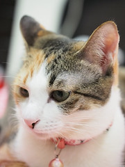 20120709-P7090120 (Noelas) Tags: pet cat momo kitten g taiwan olympus mo 09 taipei dslr   1425  asph f25 07    omd 2012 m43 14mm em5 microfourthirdssystem panasoniclumixg14mmf25asph olympusomdem5