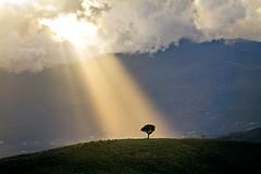 Spotlight (Kahlan_) Tags: light sun tree clouds landscape countryside nuvole spotlight campagna sole albero luce paesaggio collina