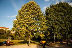 Herbstzeit im Grli (Timor Kodal) Tags: park autumn trees musician leaves yellow kreuzberg herbst himmel bank bltter bume baum farbig weg frauen parkbank grlitzer kreuzklln strasenmusiker