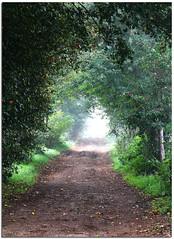 Sentiero e nebbia (Seve967) Tags: verde alberi canon nebbia