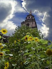 Boston (Heiðbrá) Tags: blue sky cloud color building green yellow boston canon clauds sunflowers ský blóm himinn gulur sólblóm bygging grænn canong12 heiðbrá