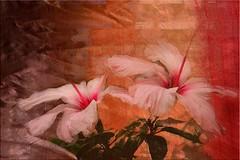 Ibiscus in texture (Laralucy) Tags: pink flowers flower macro verde texture foglie digitalart rosa natura fiori fiore ibiscus elaborazione thegalaxy magicunicornverybest blinkagain galleryoffantasticshots rememberthatmomentlevel1 sunrays5 rememberthatmomentlevel2
