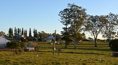 Tullera winter chooks (dustaway) Tags: afternoonlandscape afternoonlight winter tullera village lismore northernrivers nsw australia australianvillages townscape chickens chooks