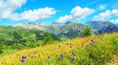 fiori in vista (Gabriele Sesana) Tags: livigno panorama landscape fiori flowers mountain montagna passeggiata