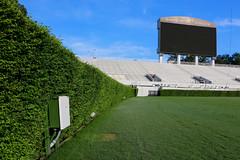 IMG_9707 (UGA College of Ag & Environmental Sciences - OCCS) Tags: grass turfgrass tiff419 419 sanfordstadium privet hedge hedges scoreboard