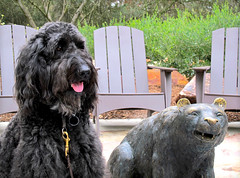 Benni and the Bear Cub (Bennilover, off for a week's vacation) Tags: dog dogs bear bearcub sculpture labradoodle benni smiling teeth posing funny walk morning august