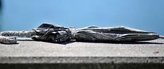 Forgotten (dVaffection) Tags: umbrella seashell ocean coquina abandoned streetpassionaward