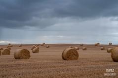 DSC_0898 (Asinka Photography) Tags: summertime hay bales sky darkclouds