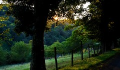 ~~Un soir sur le chemin...1~~ (Jolisa) Tags: chemin aot2016 soir evening coucherdesoleil sunset atardecer