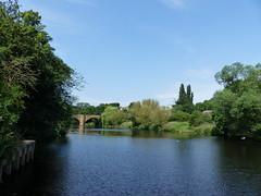 P1110270 (jrcollman) Tags: plants splant salix blackheadedgull rivertees yarm bridges