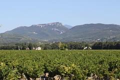 ventoux / Dentelles/ vignes ([insta :@provence_rhone_ventoux]) Tags: ventoux dentellesdemontmirail vignes
