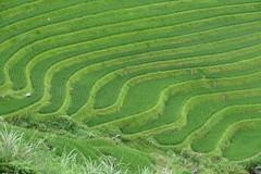 P1000822 (Les photos du chaudron) Tags: chine favoris