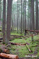 Glacier National Park - 12 (shehzadq) Tags: cedars glaciernationalpark montana moss oldgrowthforest