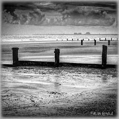 Every Grain of Sand (ArtfulAl) Tags: dymchurch beach kent gull mono grain