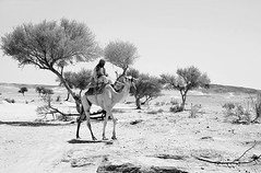 Shepherd of camels traveling under the sun (SAUD ALRSHIAD) Tags: camera light sky bw black monochrome lens landscape view angle shepherd arabic camel saudi arabia riyadh arabi saud saudia     ryiadh landscab   alrshiad msawr saudalrshiad illustrativeviewpoint shepherdofcamels