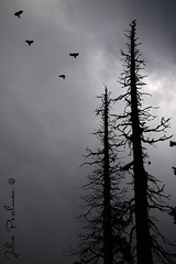 * (Julia Perelman) Tags: travel trees bw india white black tree birds forest landscape asia kashmir