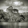 Tarn Hows (violinconcertono3) Tags: trees england blackandwhite lake mountains nature water beautiful square landscapes flickr unitedkingdom fineart lakedistrict cityscapes peaceful cumbria idyllic coniston pinetrees fineartphotography davidhenderson tarnhows blackwhitephotos fineartphotographer londonphotographer 19sixty3 19sixty3com