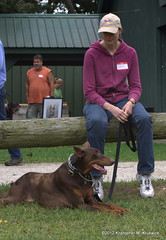Our dobie Fife! (kmkruswick) Tags: dru dog doberman dobie 2012 fallpicnic dobermanrescueunlimited