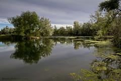 wilson spring ponds (Schooksonruss) Tags: morning trees nature water sunrise reflections landscape moss cloudy idaho springs serene algae ponds nampa blueribbonwinner sunlite schooksonruss russellcstokes wilsonspond wilsonspringponds