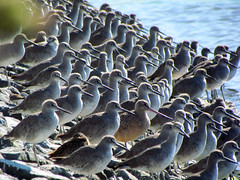 Willets (AndrewJSmith) Tags: 2 me photography you me2youphotographylevel4