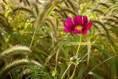 Cosmos in the Weeds