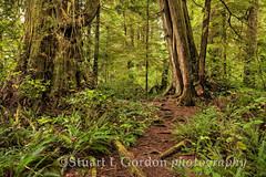 Meares Island Rainforest (chasingthelight10) Tags: travel trees canada nature photography landscapes rainforest britishcolumbia events places foliage vancouverisland hemlock forests redcedar nationalgeographic wildernesstrails mearesisland douglasfir clayoquotsound otherkeywords