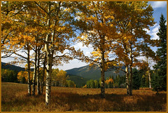fall near Evergreen (f l a m i n g o) Tags: camera autumn mountains color tree fall field leaves digital canon eos rebel colorado border meadow scene september evergreen frame change ipiccy