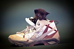Moix a la sabata (Juan Antonio Cap) Tags: gato cat minino felino animal feline canoneos5dmarkii descanso mace katze   koka   kissa chat  kat kucing kttur gatto kot pisic   kedi      gat moix  maka  pusa mo  gatito kitti kitty pussy mascota pet