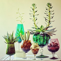 A Third Collection (Ken Marten) Tags: cacti vintage square colours retro squareformat 70s terrarium succulents aloevera amaro echiveria terrariums brandyglasses iphoneography instagramapp uploaded:by=instagram