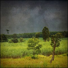 Rain (ulli_p) Tags: trees sky tree green art texture nature colors beautiful clouds rural photoshop landscape thailand colorful asia southeastasia colours best textured cloudysky isan artisticexpression amazingcolours aworkofart supershot topshots flickraward texturedphoto ruralthailand naturewatcher earthasia thebestshot tatot bestflickrphotography totallythailand artofimages magicunicornmasterpiece exoticimage mygearandme canoneoskissx5