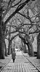 northbound (eb78) Tags: nyc newyorkcity blackandwhite bw monochrome centralpark manhattan grayscale uppereastside greyscale