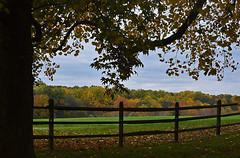 Oatlands Plantation (Lea and Luna) Tags: autumn color tree fall nature leaves fence landscape virginia nikon branch foliage va leesburg nikkor oatlands oatlandsplantation d5100 55300mmf45