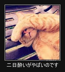 二日酔いがやばいのです #二日酔い #やばい #猫 (Demochi.Net) Tags: life cute sexy japan fun japanese motivator culture 日本 ペット 猫 demotivator 金 家族 結婚 ゲイ 女 子供 おっぱい 愛犬 政治 社会 巨乳 文化 眼鏡 教育 demotivators 経済 女性 初恋 r18 女子 カップル 子猫 女装 お笑い motivators 会社 少子化 企業 ユーモア 恋 悪い 格差 風刺 一言 デモチ 大喜利