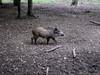 Schwein gehabt 06.09.2012