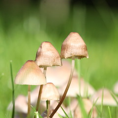 mushrooms , explored! ( #241 ) (bugman11) Tags: macro nature mushroom canon mushrooms flora nederland thenetherlands fungi thegalaxy platinumheartaward 100mm28lmacro mygearandme mygearandmepremium ringexcellence allnaturesparadise