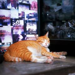 東昇喵 (Steve only) Tags: mamiya mamiyaflex c2 mamiyasekor 10535 105mm f35 chromeseries tlr fujifilm velvia 100 6x6 120 mediumformat epson gtx820 v600 film snaps cats catseverywhere fujichrome rvp100 slide positivefilm 正片