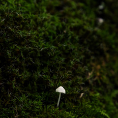 Minimal magic (Lumase) Tags: macro green nature mushroom square moss magic tiny closer valletesso