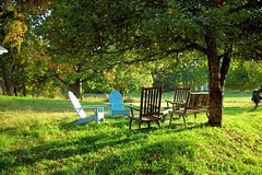 apple trees (omoo) Tags: autumn fall grass chairs farm newyorkstate catskills adirondack nys appletrees countryliving sullivancounty adirondackchairs formerdairyfarm nearbethel nearbethelny octoberinthecountry