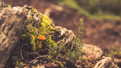 Fairy Garden (TheWildFireOne) Tags: birnam toadstool mushroom forest summer little people fairy green orange 500px