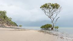 Mangrove (- Jan van Dijk) Tags: mangrove greatsandystrait beach clouds wolken rain australia queensland fraserisland simplicity nature natuur serenity serene rustig