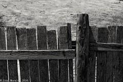 Pedacitos de palmar 4. #tbt #afternoon #rice #fields #albufera #parque #natural #nature #naturelovers #valencia #life #summer #reflections #bicycle #serenity #nature #naturelovers #bnw #b&w #byn #noir #black #blackandwhite #bnw_life #noir #metal  #birdwat (Ivalethia) Tags: bnwglobe blackandwhite natural afternoon black valencia tbt life b nature parque naturelovers reflections albufera bnwlife bicycle noir serenity rice birdwatching streetphotography bnw summer metal fields rural byn